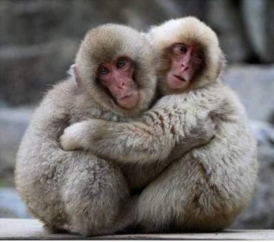 Όταν τα ζώα δίνουν παράδειγμα φιλίας